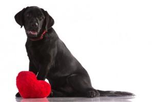 Yo tengo un perro negro llamado depresión